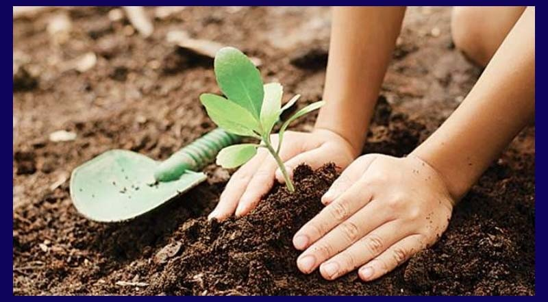 Tree plantation means planting trees in large numbers throughout the country. Trees help us by providing us with food, oxygen and fuel. If there were no trees, there would be no oxygen and life would have ceased to exist. The loss of trees means the loss of life. It leads to less rains and fall of harvest. If in a given area trees do not exist in adequate proportion to men, animals, soil, air and water. The ecological